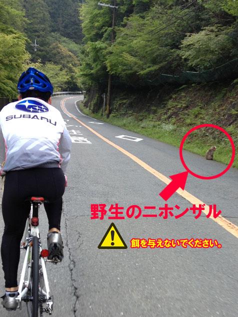 箕面 サイクリング